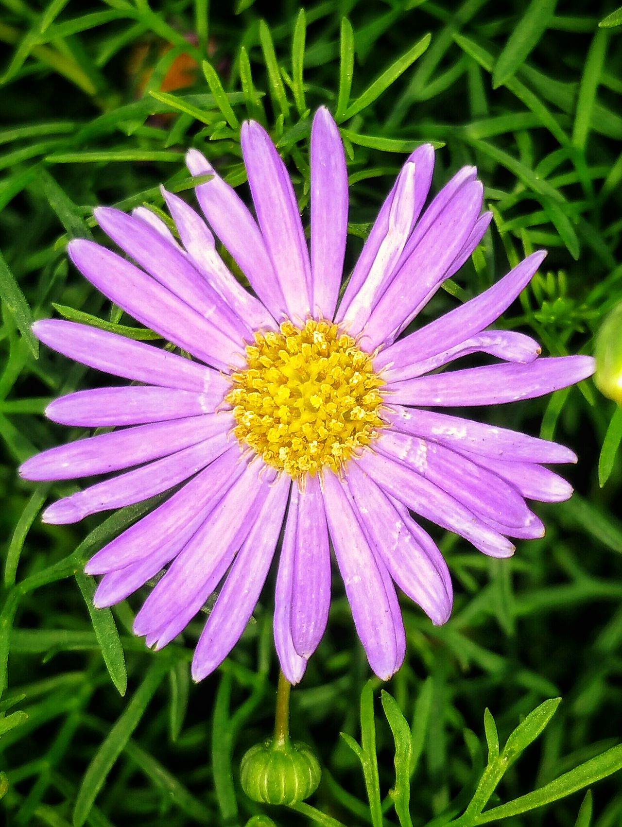 Saw this lovely pink wildflower while out for a walk reminds me of a wild Daisy Pink Daisy Pink Flower Wild Flower Photography Wild Flower Beauty Macro Beauty EyeEm Best Shots - Nature EyeEm Best Shots - HDR Hdr_captures Malephotographerofthemonth EyeEm Masterclass Close-up Close Up Photography Creative Light And Shadow Color Photography Beauty In Nature Macro Photography Close Up The Beauty Of Nature Flower Close Up Flower Head Flower Collection EyeEm Flowers Collection Colour Of Life Color Palette