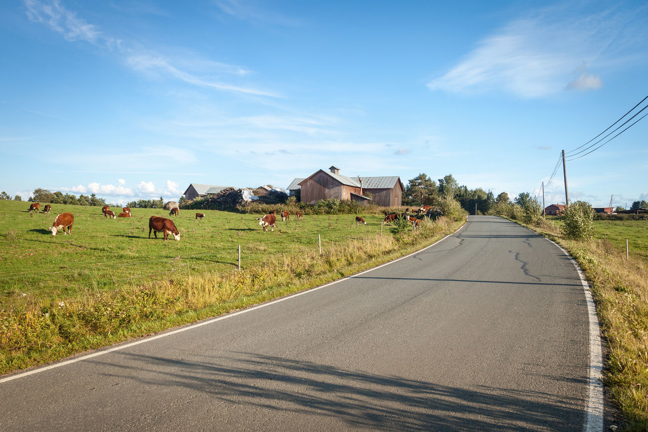 A road and a meadow. Cows eating on the meadow. Architecture Blue Building Built Structure Clear Sky Cows Day Empty Road Grass Green Color Highway Landscape Meadow Meadowlands Mountain Nature No People Outdoors Road Scenics Sky The Way Forward