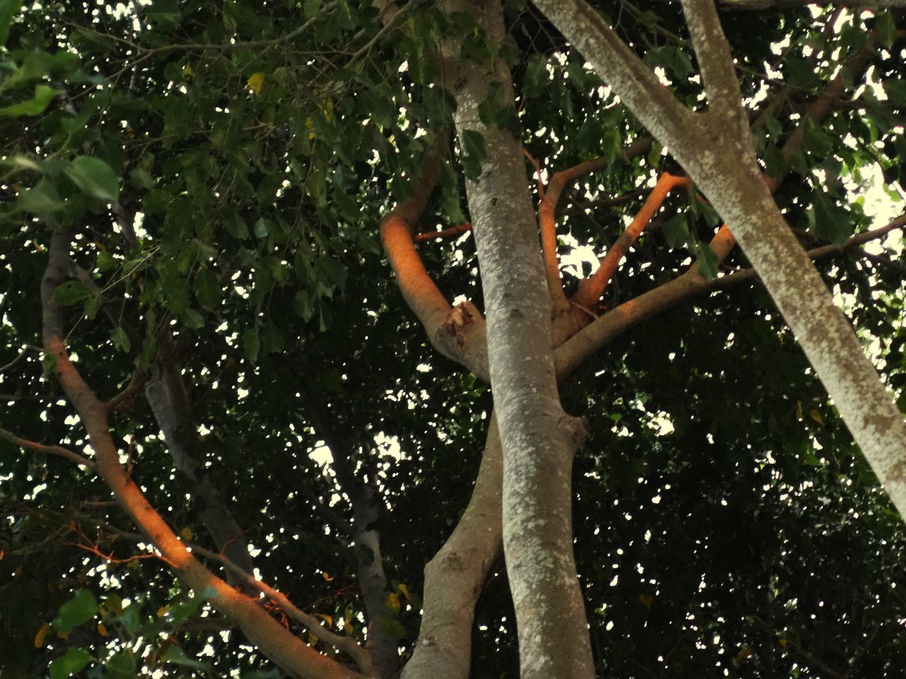 Tree Branch Growth Real People Nature Leaf Day Outdoors Beauty In Nature Low Section Trees Sunlight Tree Tops