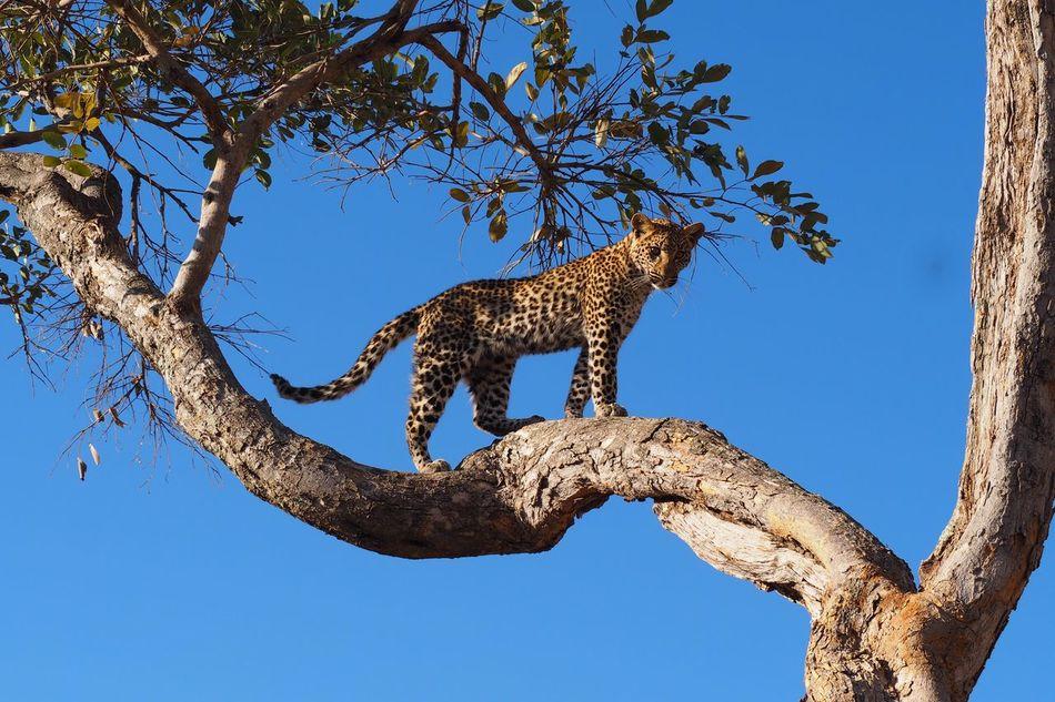 Beautiful stock photos of tiere,  Alertness,  Animal Markings,  Animal Themes,  Animals In The Wild