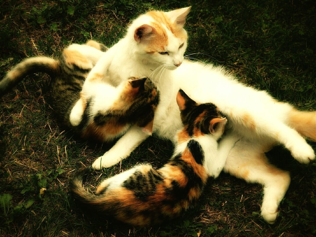 Animal Themes Cats Of EyeEm Babycats Domestic Cat Domestic Animals Togetherness Motherlove