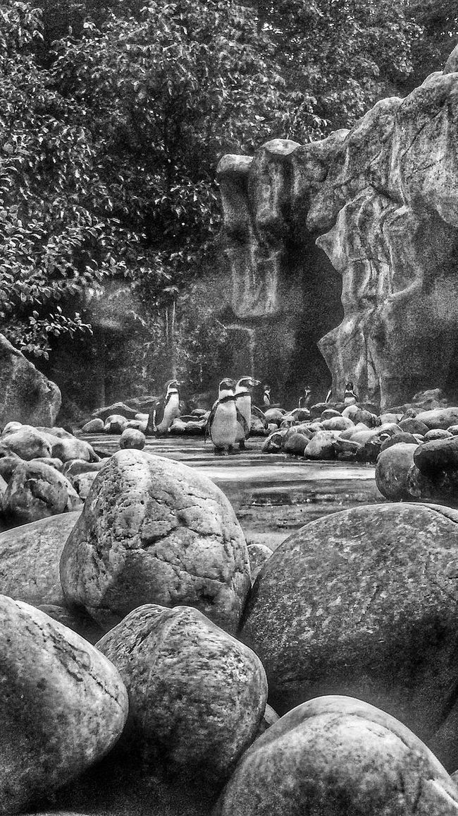 Shades Of Grey Blackandwhite B&w Zoo EE Love Connection! EyeEm Best Shots - Black + White Eye4photography  Streetphotography EyeEm Nature Lover EyeEm Best Shots - Nature