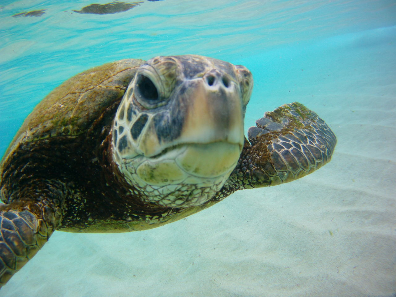 Beautiful stock photos of turtle, Animal Scale, Animal Themes, Animals In The Wild, Close-Up