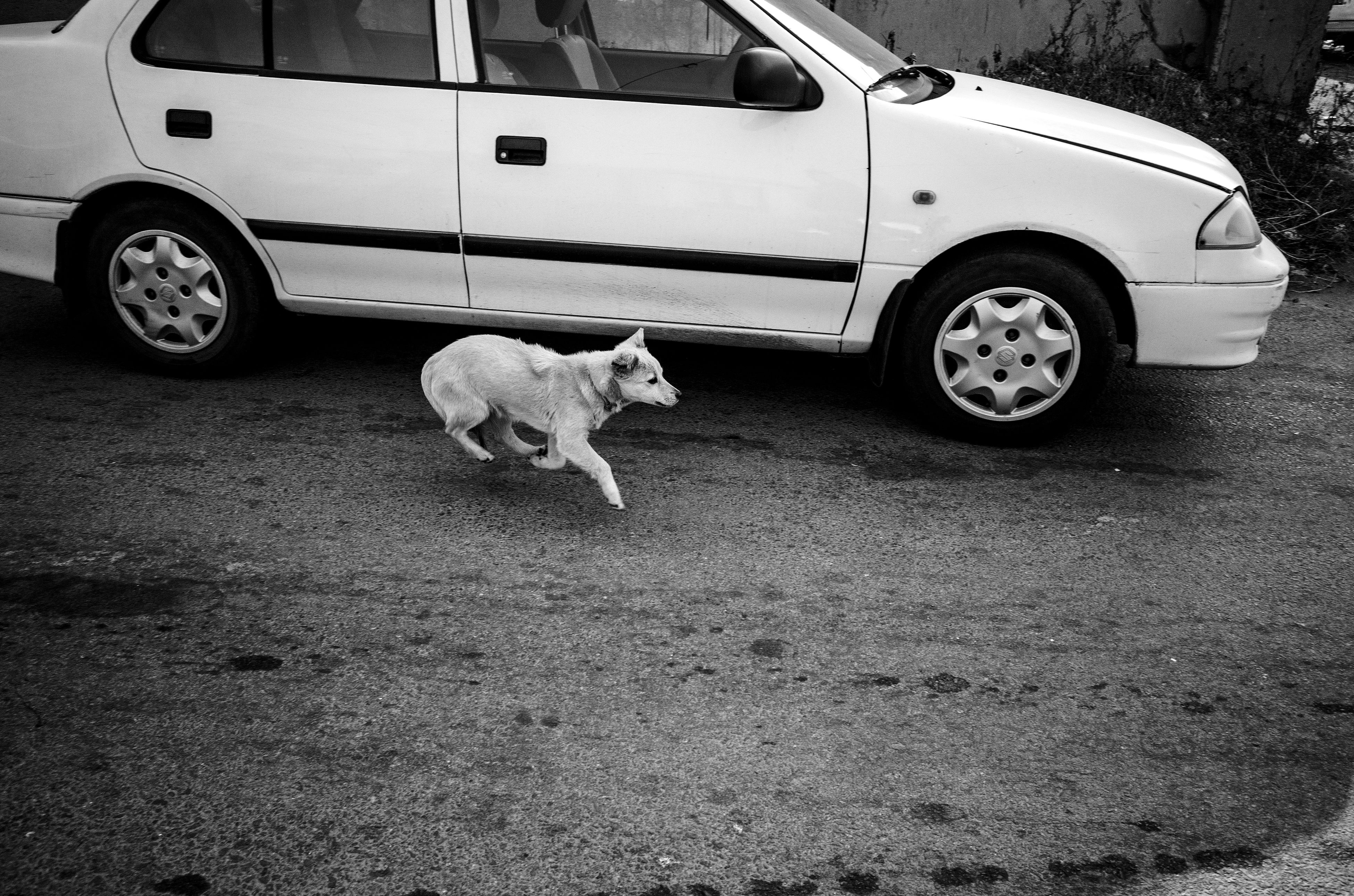 transportation, land vehicle, animal themes, mode of transport, domestic animals, one animal, car, mammal, street, pets, road, stationary, outdoors, day, side view, dog, no people, bicycle, wheel, sunlight