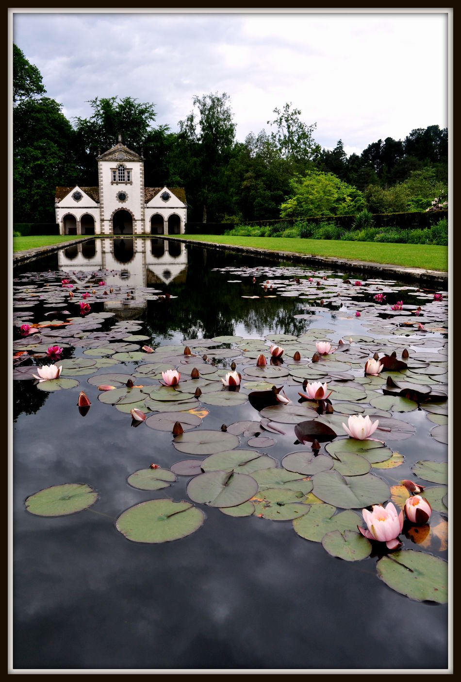 Beauty In Nature Bodnant Bodnant Gardens Floating On Water Flower Flowers Flowers, Nature And Beauty Flowers,Plants & Garden Lily Pond Nature No People Outdoors Plant Reflection Water Waterlily Waterlilypond