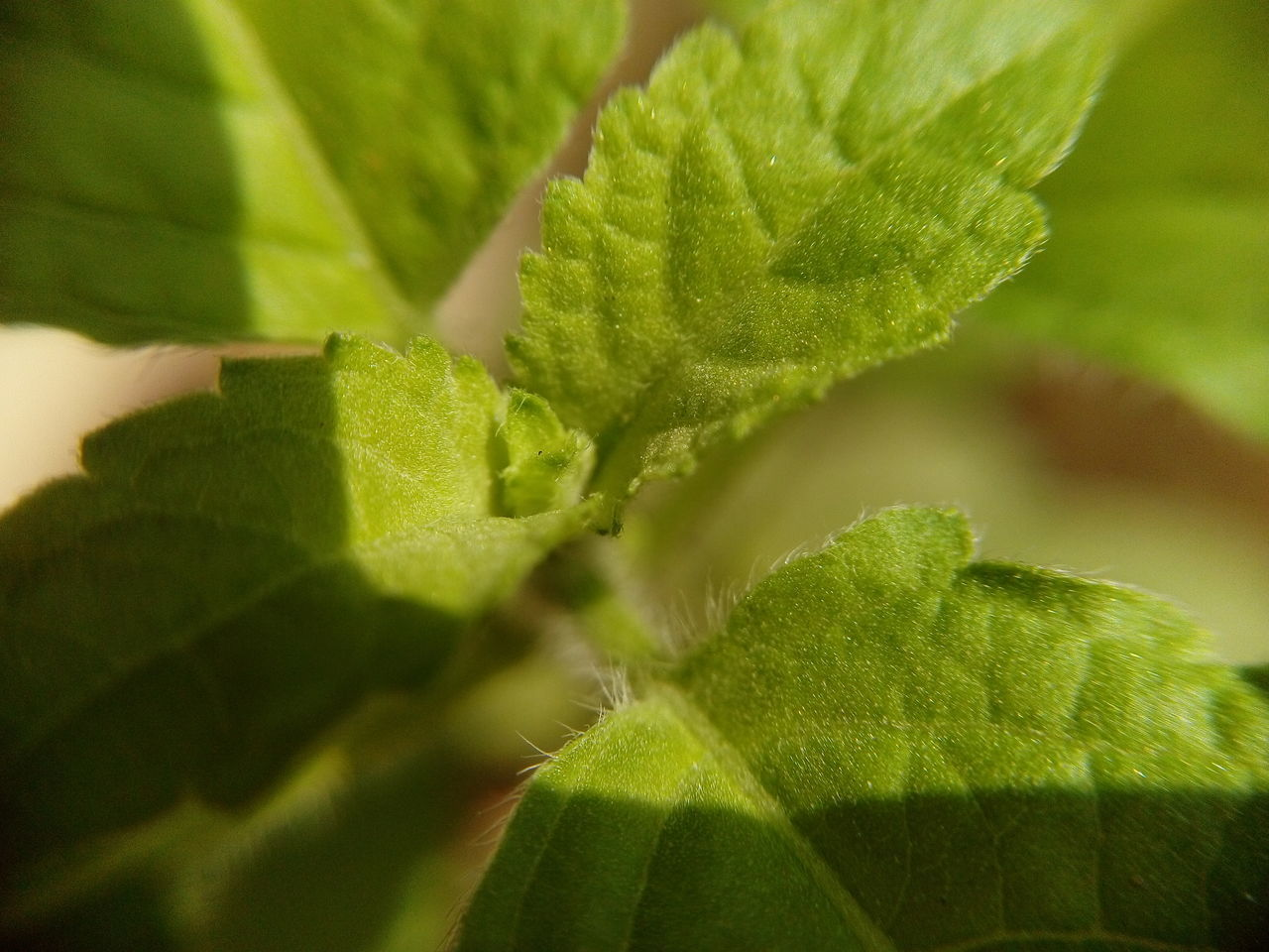 Beauty In Nature Close-up Day Green Color Growth Leaf Nature No People Outdoors Plant