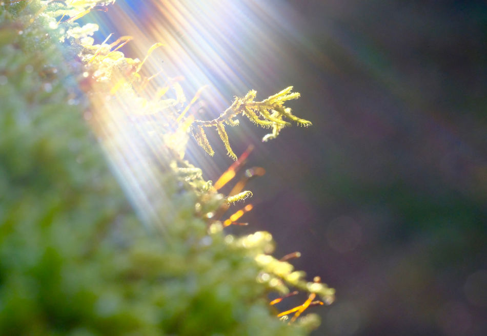 Beauty In Nature Close-up Fragility Glitch Glitchart Lensflares Moss Mossporn Nature Outdoors Plant Sunbeams