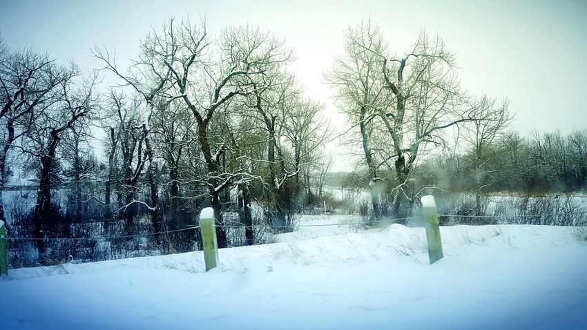 Tree Nature Cold Temperature No People Winter Snow Sky Outdoors Day Beauty In Nature Scenics Winter Wonderland Wintertime