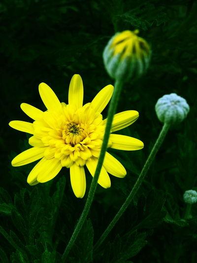 Flower 花 Nature