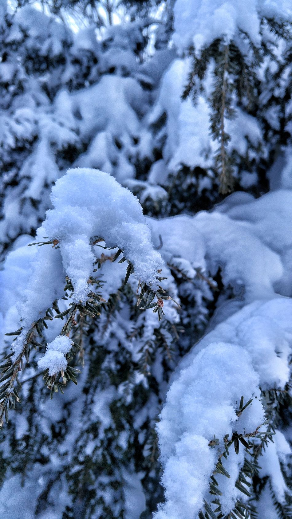 Winter Snow Cold Temperature Weather Close-up Nature No People Covering Day Outdoors Beauty In Nature Tree High Snow Freezingweather Freeze Shots New England  USA Photos