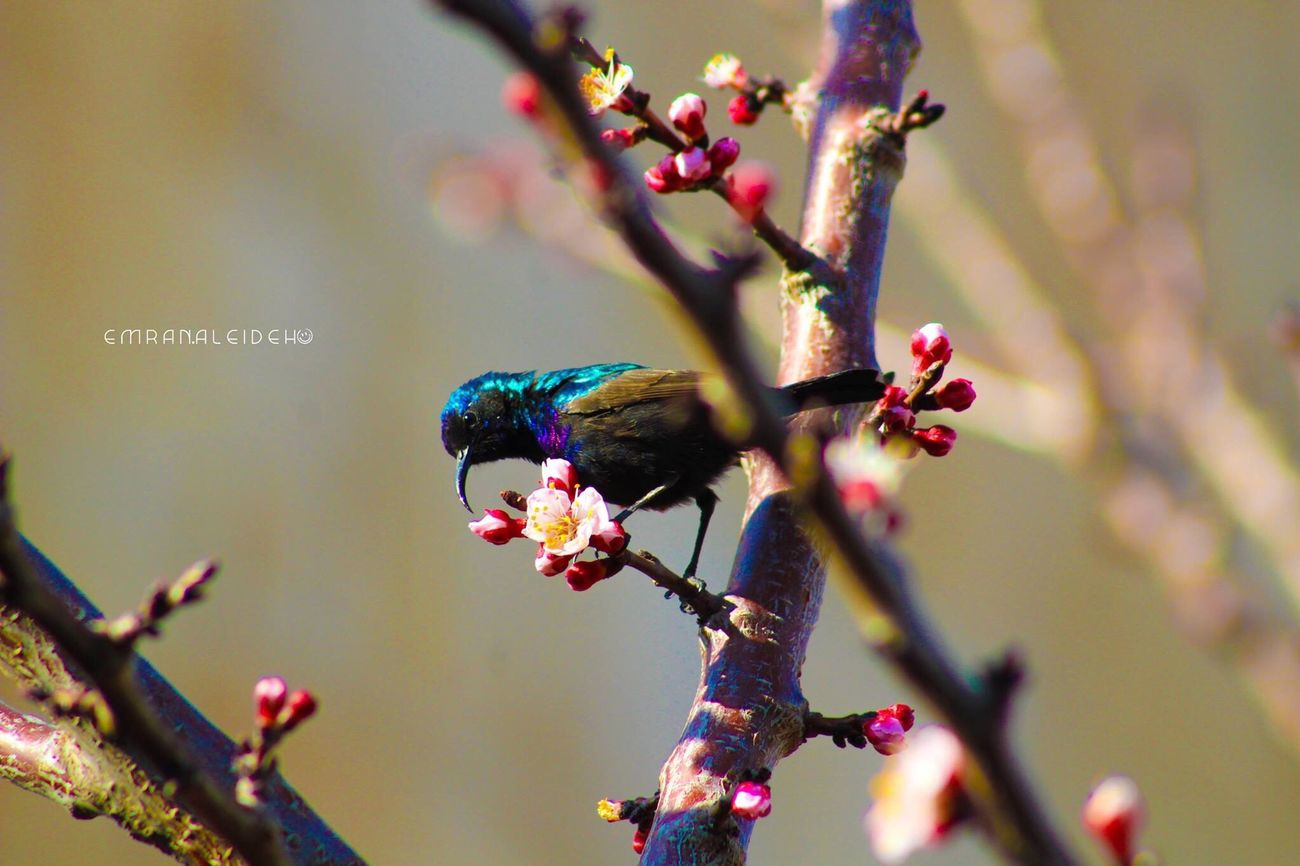 Bird Tree Spring Beauty In Nature Jordan Middle East Nature Jordan Photography