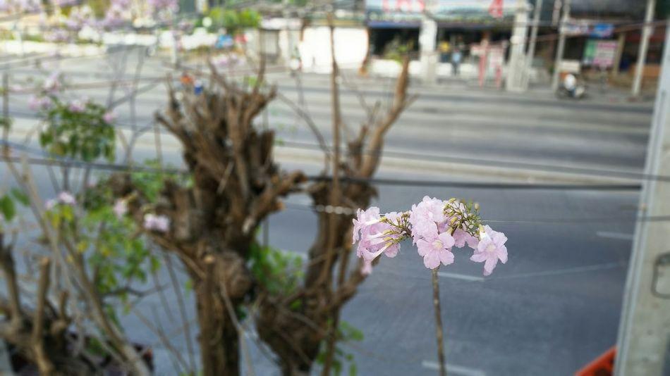 Pink Trumpet Flowers Nofilter