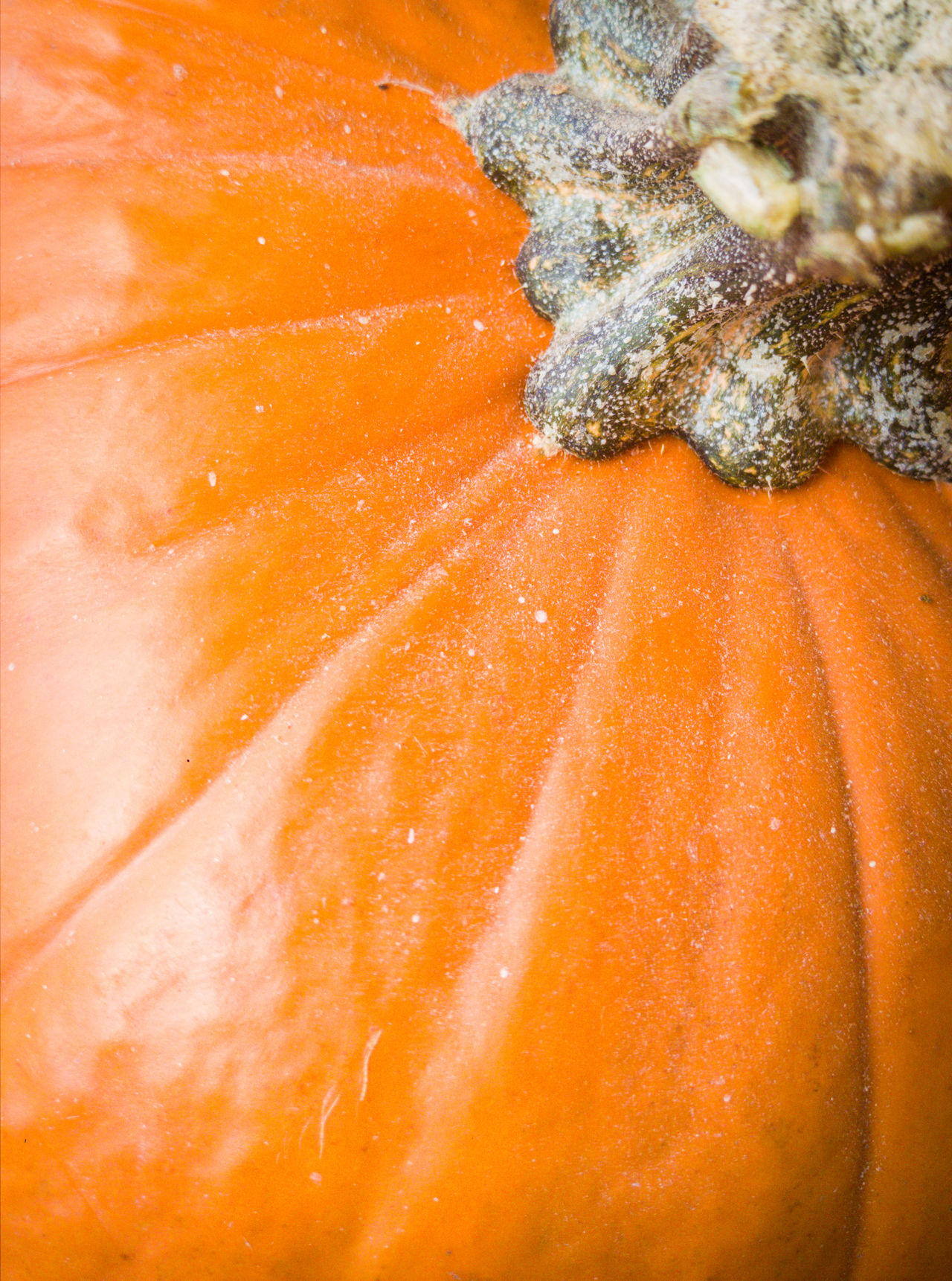 Pumpkin Orange Color Close-up Textured  Abstract No People Backgrounds Nature Fall