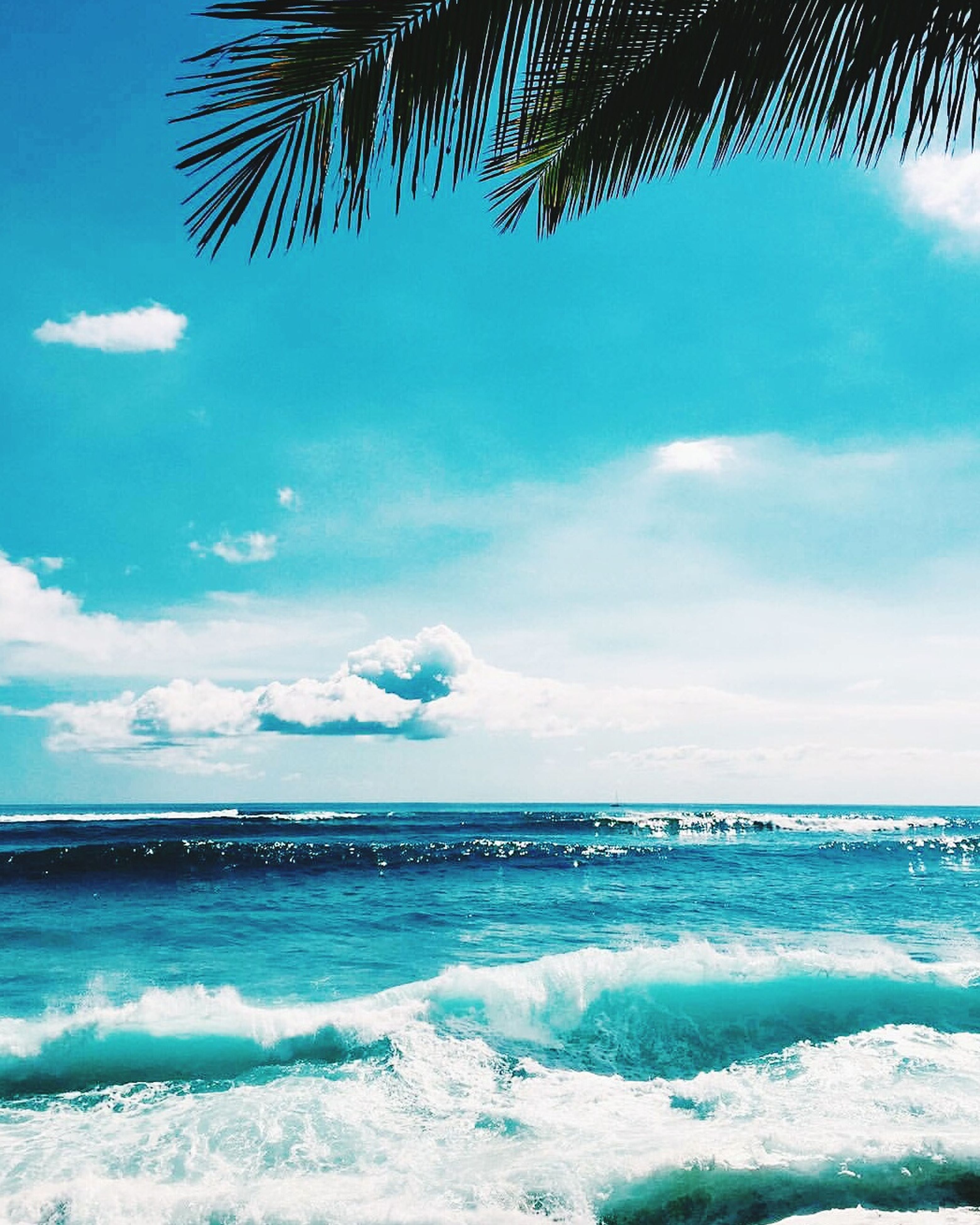 sea, beach, horizon over water, water, sky, palm tree, scenics, blue, beauty in nature, shore, tranquil scene, tranquility, nature, wave, cloud - sky, cloud, idyllic, vacations, tropical climate, day, outdoors, seascape, coastline, no people, non-urban scene, tourism, ocean, remote, travel destinations, calm, cloudy