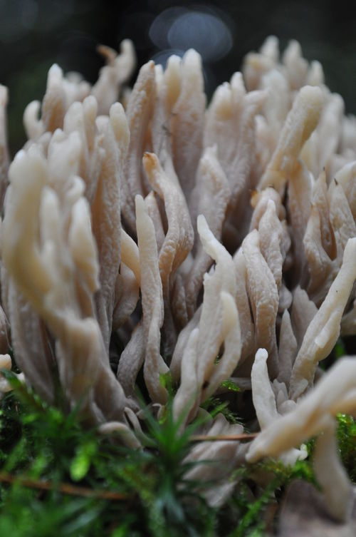 Beauty In Nature Close-up Coral Coral In Forest Detail Focus On Foreground Forest Macro Macro Photography Nature No People Shrooms Still Life