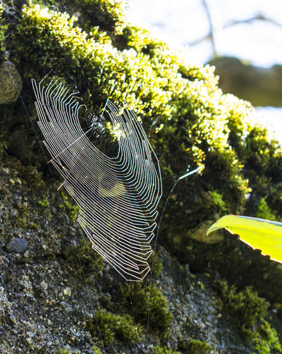 Web Spiderweb Spider Web No People Nature Day Close-up Beauty In Nature Spider World Collier Neklace Spiderworld Spiderwebs Architecture Spider House Fabulous Beautiful Nature Artist Art Is Everywhere