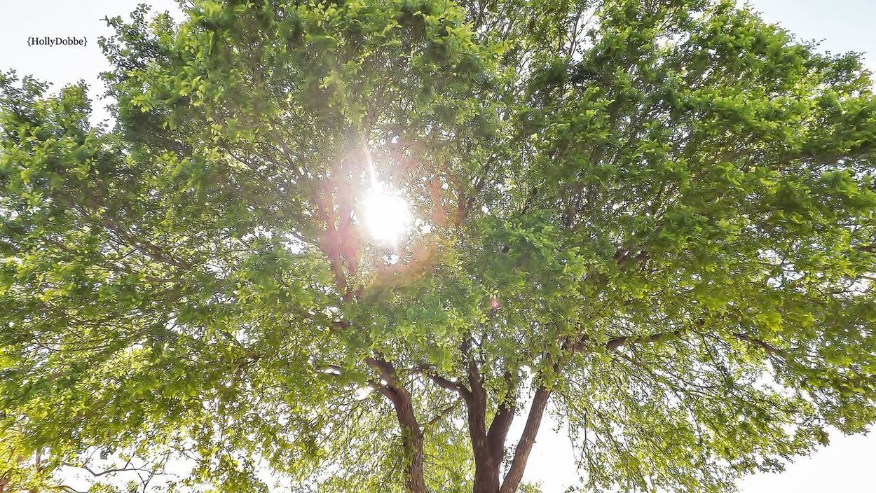 Tree Beauty In Nature Nature Sunbeam Outdoors Tranquility Sun Sunlight Branch
