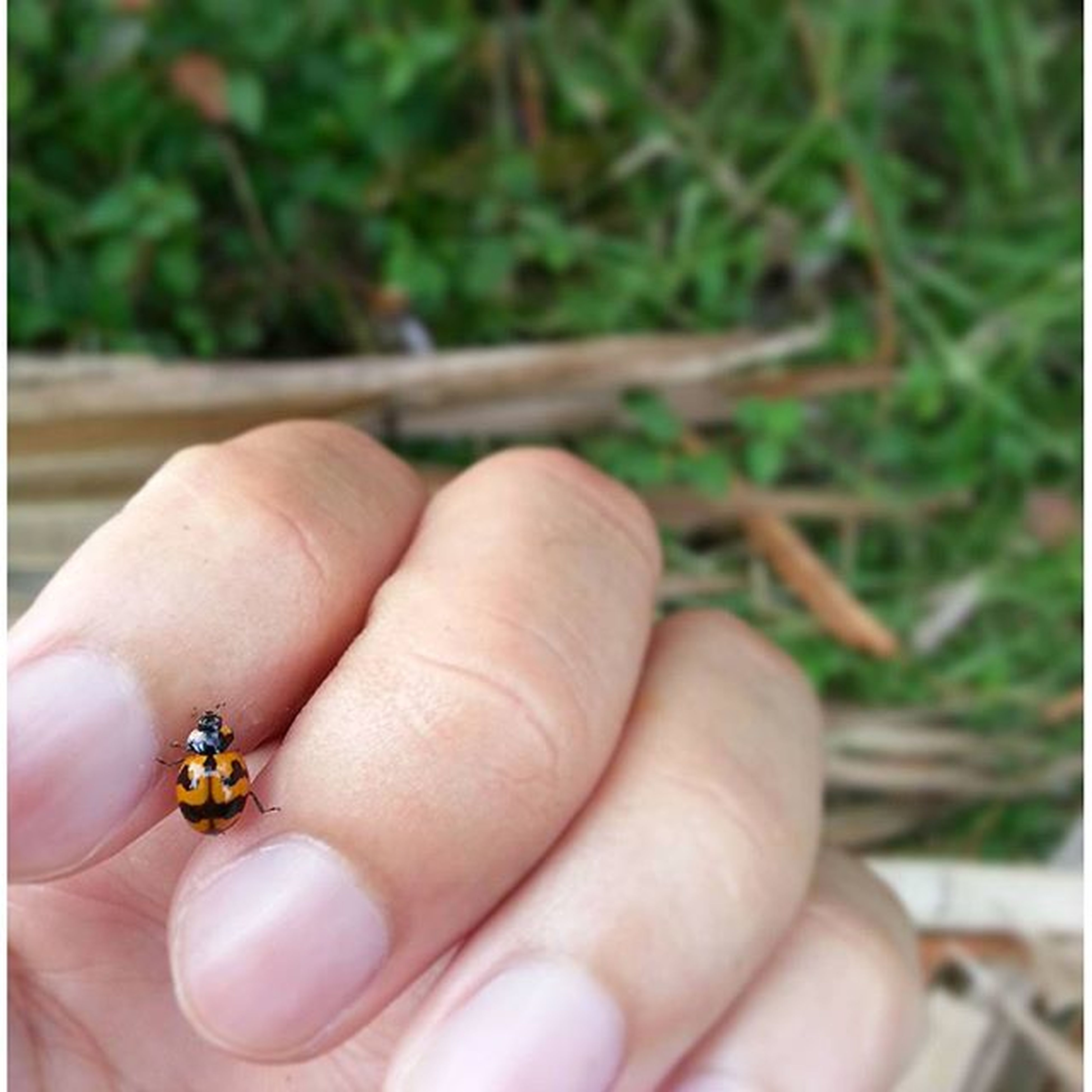 person, part of, human finger, holding, cropped, close-up, unrecognizable person, focus on foreground, personal perspective, ring, high angle view, insect, selective focus, showing, day, fragility, outdoors