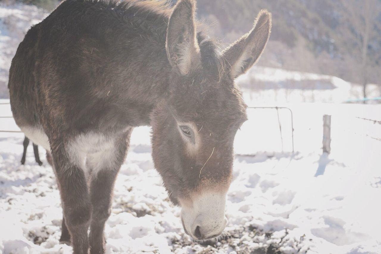 Beautiful stock photos of donkey, NULL