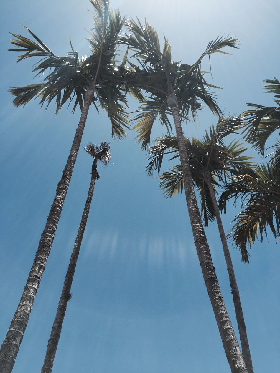 Beautiful stock photos of florida, Blue, Branch, Clear Sky, Day