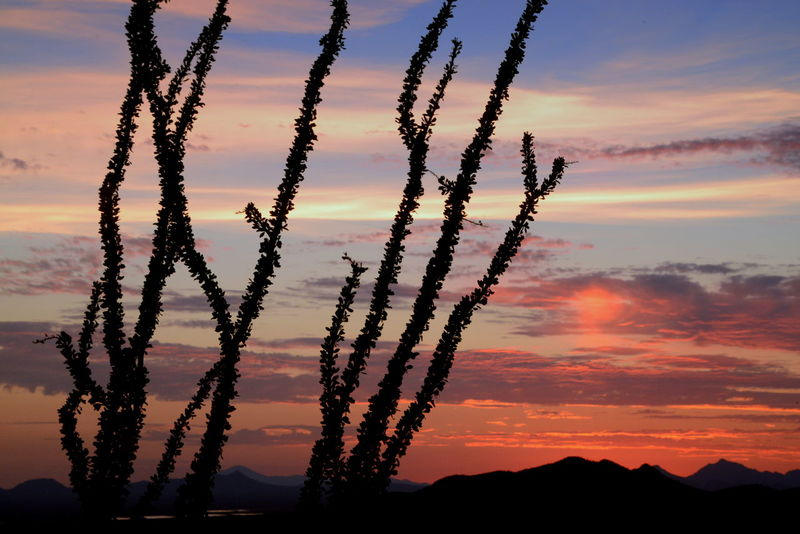 Deserts Around The World ocotillo sunset in the Sonoran desert Arizona Sonoran Desert Sunset Ocotillo Relax Pink Desert Desert Beauty