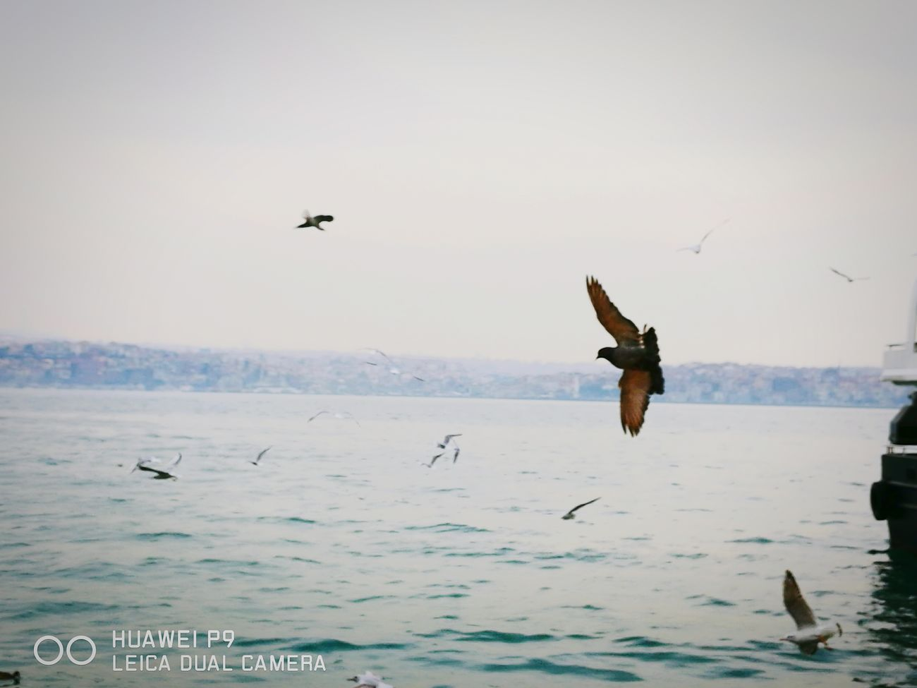Nature Birds🐦⛅ Birds Of EyeEm  Sea And Sky Too Beautiful Istanbul Turkey Life In Motion Life In Colors