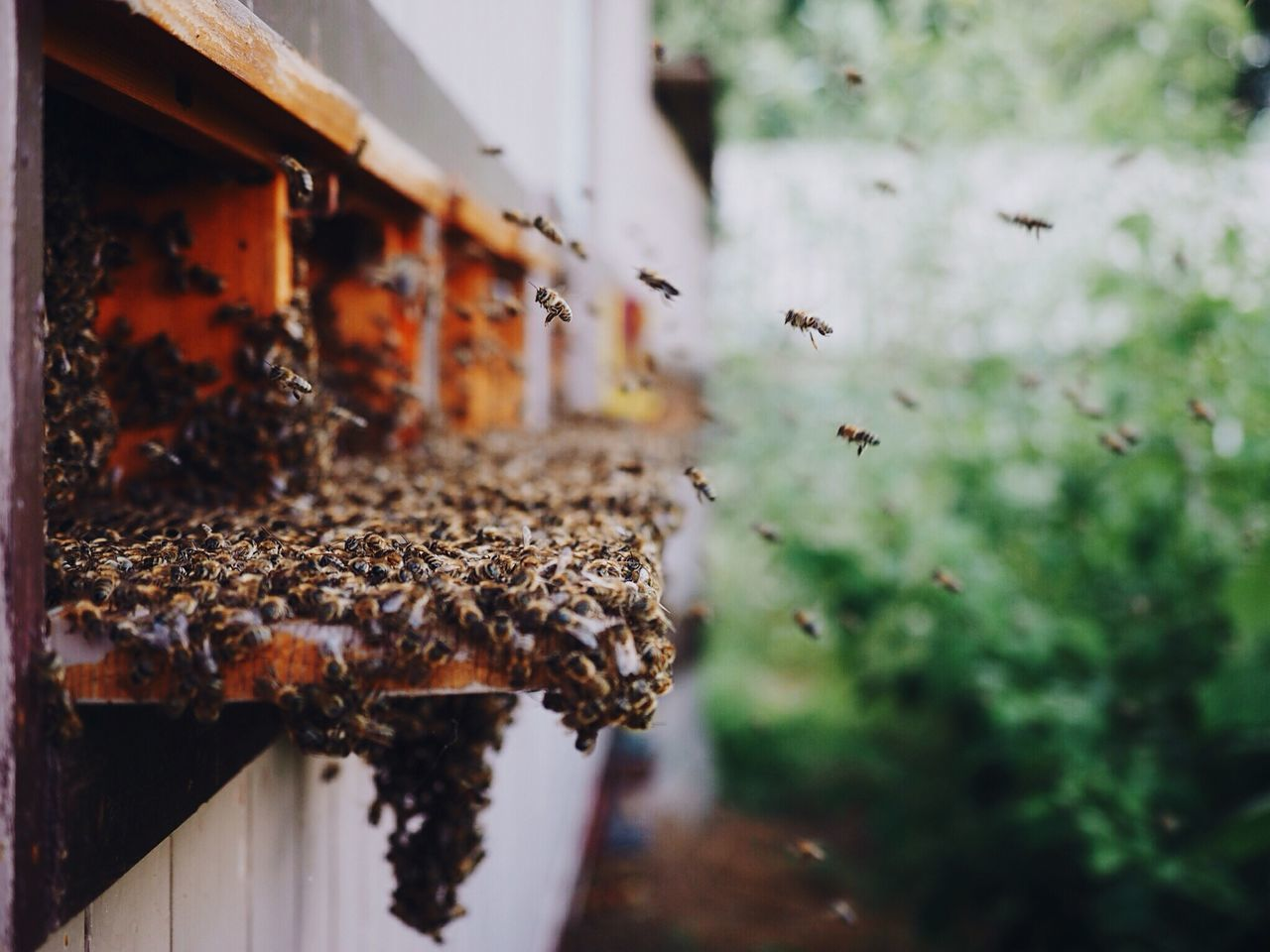 The bees are masters in community work: everyone has its own important job and togheter they build a great performing community bee Collected Community EyeEm Nature Lover From My Point Of View Nature Working popular photos Summer Views Deceptively Simple What I Value My Best Photo 2015