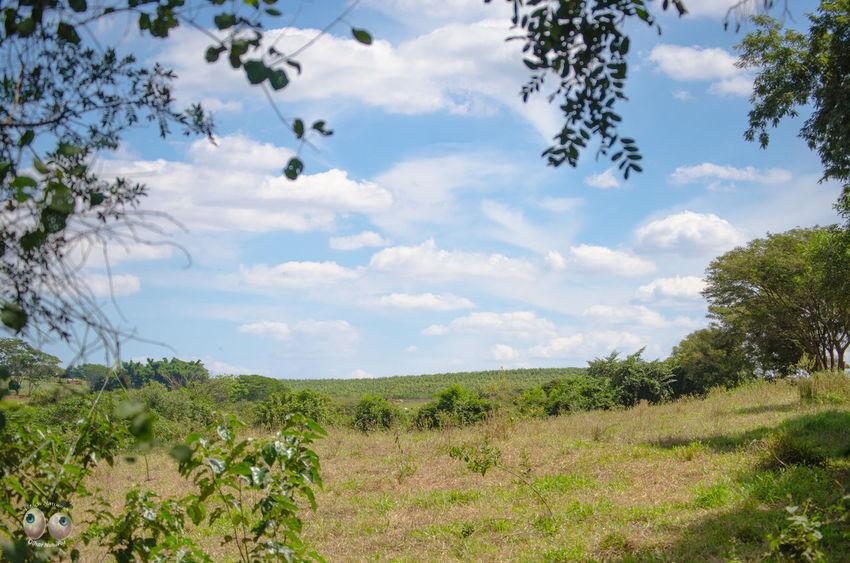 Phtographydocumentary Arte Azul Verde Green Photoart Natureza Nature Photography Olharnatural Vitaonatureza Victornatureza Fotografiaéarte Fotografia Natural Terra