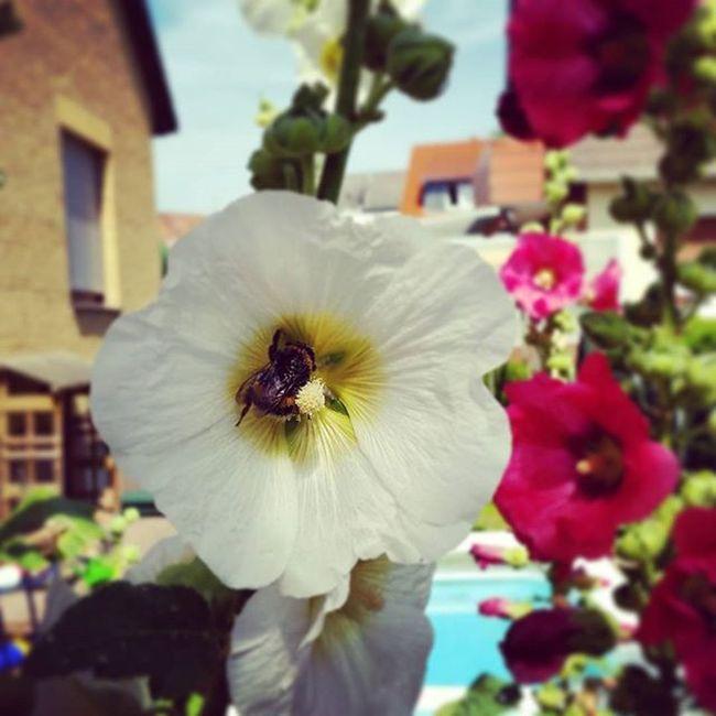 Garden Summer Bemyguest
