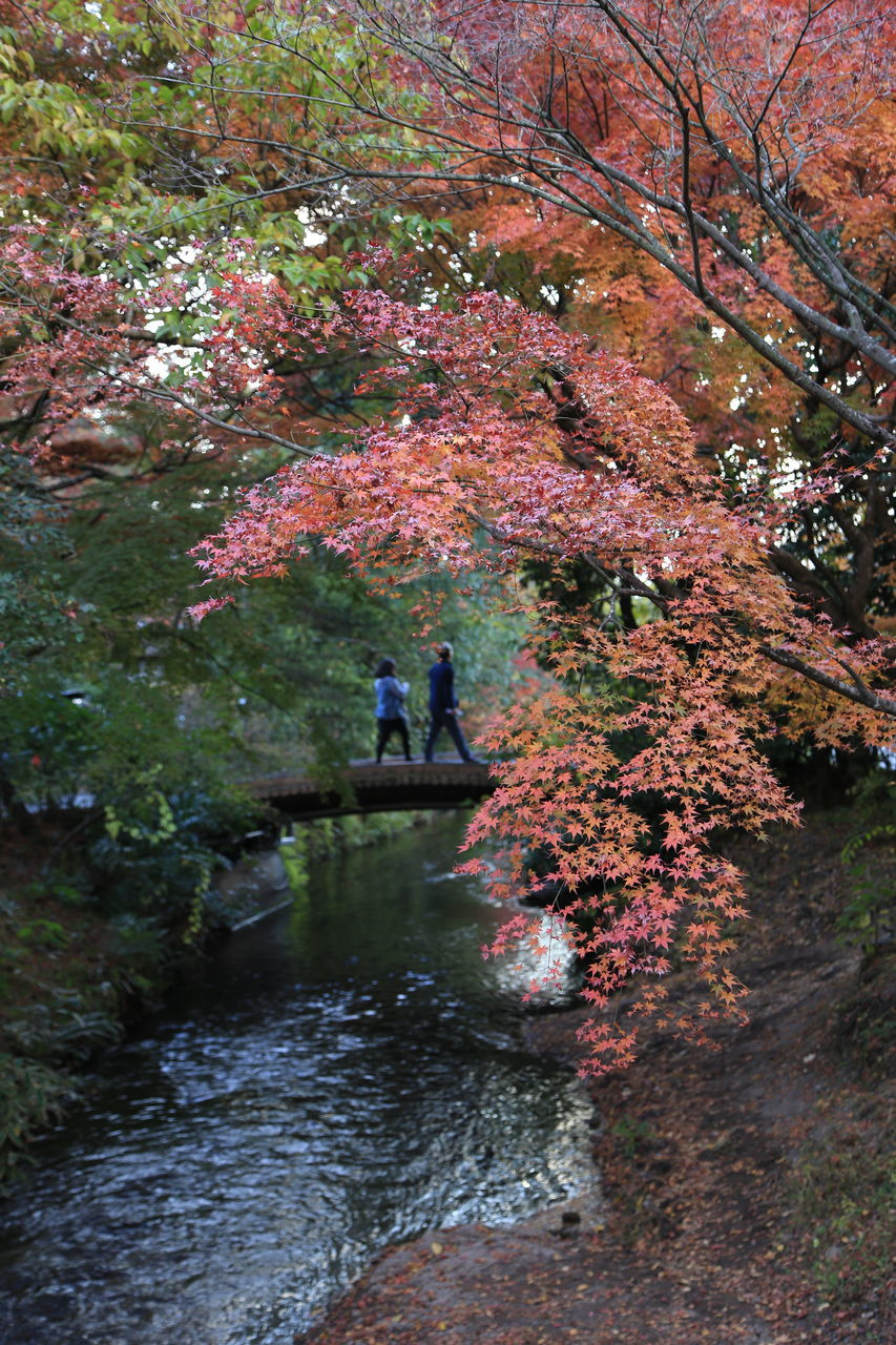 tree, autumn, nature, beauty in nature, growth, day, change, two people, outdoors, tranquil scene, tranquility, river, water, flower, scenics, plant, branch, leaf, real people, men, full length, freshness, mammal, people