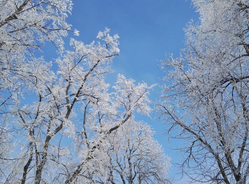 Sky Winter Cold Temperature Tree Nature Outdoors No People Branch Day Beauty In Nature White And Blue Park White Trees Park In My City Quiet Place  Clear Sky Street Photography White Town Staring At The Sky