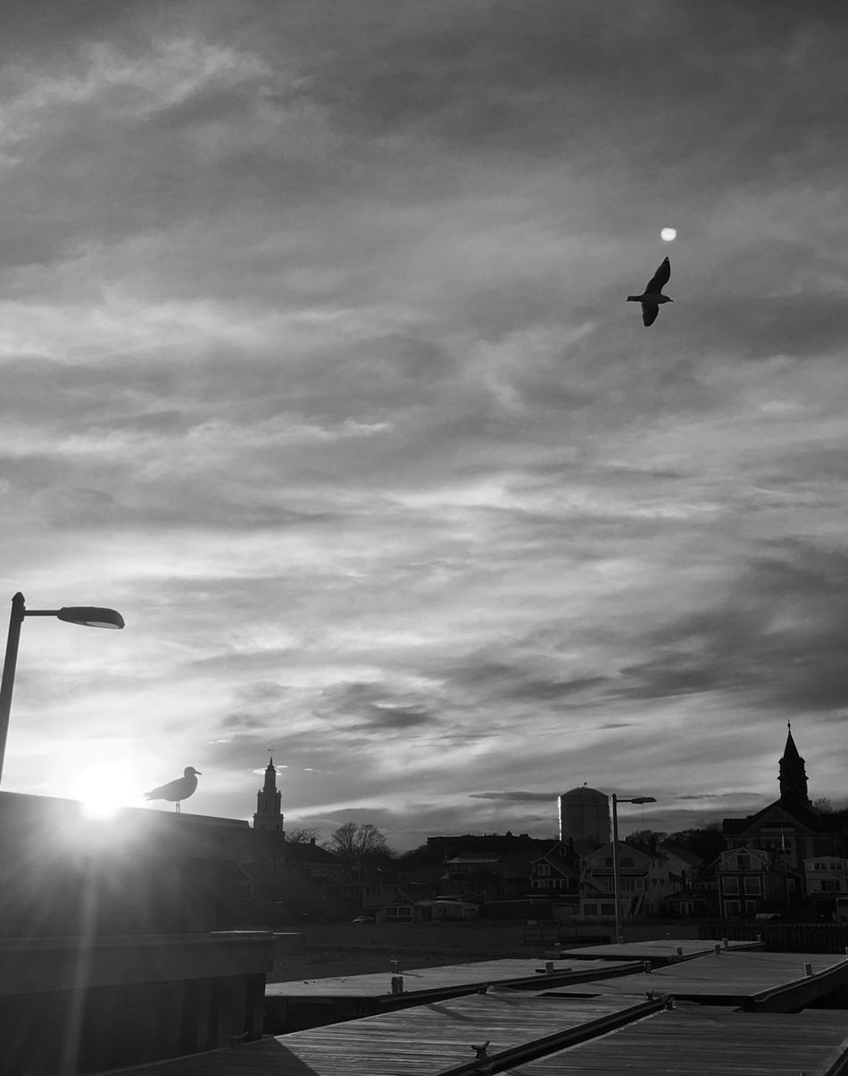 Seagulls watching sunset Bird Blackandwhite EyeEm Best Shots - Black + White Bnw Bw_collection Streetphotography