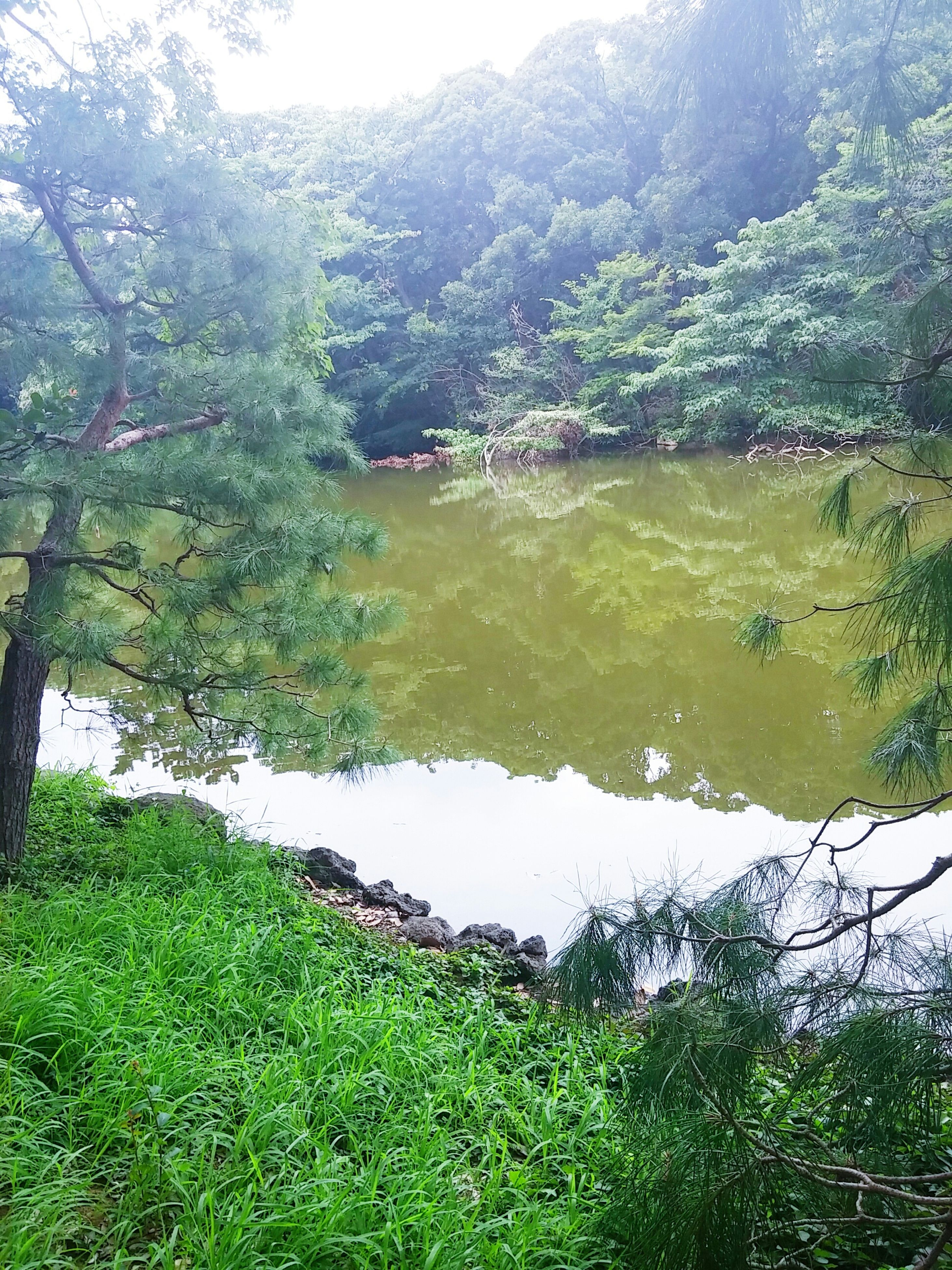 tranquil scene, tranquility, water, tree, scenics, green color, beauty in nature, grass, nature, mountain, landscape, growth, lake, high angle view, idyllic, river, non-urban scene, plant, day, remote
