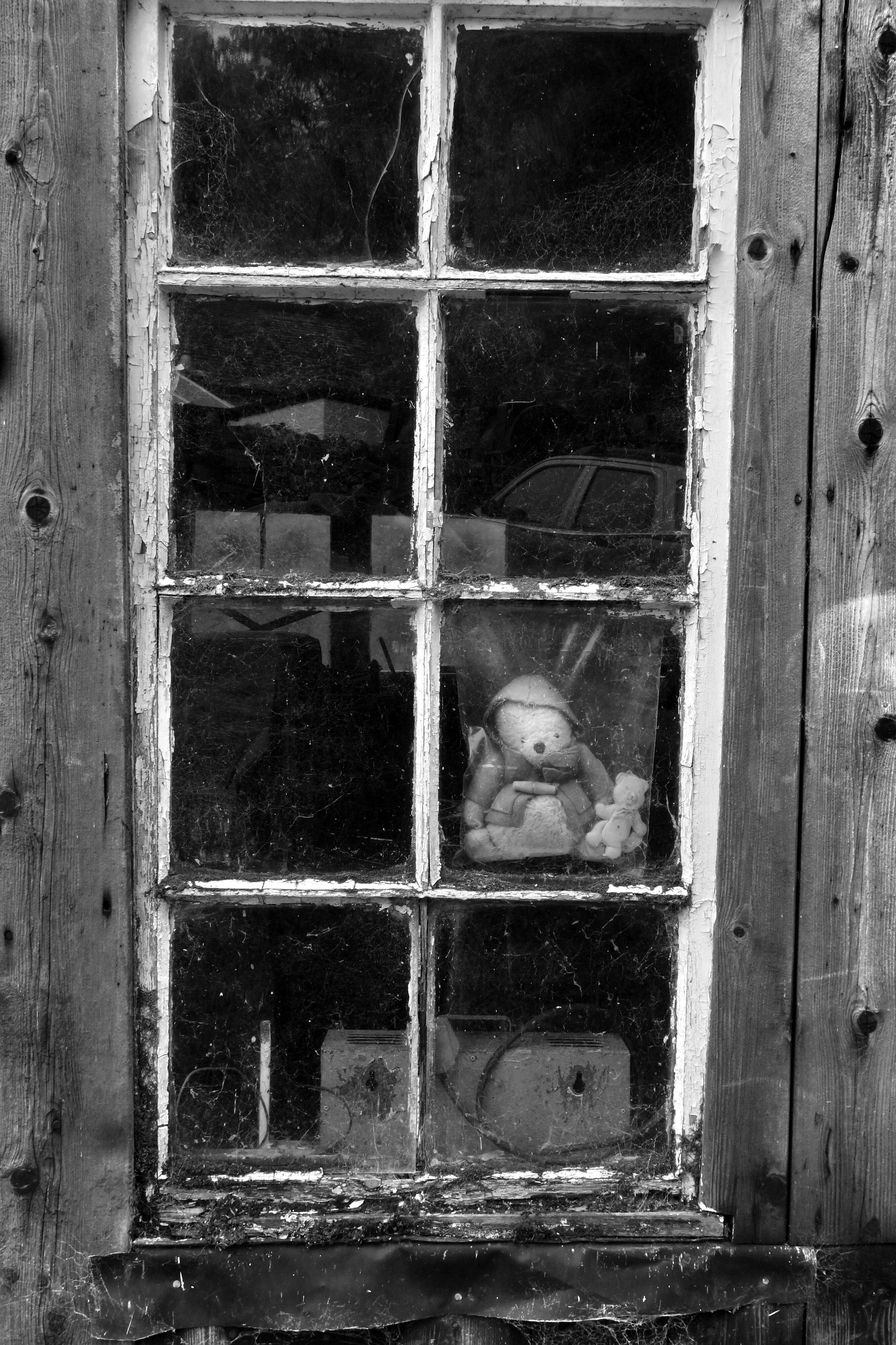 window, door, closed, built structure, building exterior, animal themes, old, metal, glass - material, safety, architecture, house, one animal, wood - material, protection, abandoned, weathered, security, damaged, entrance