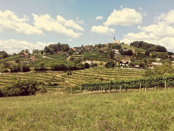 Clouds Slovenia European  Vineyard Agriculture Rural Scene Landscape Tranquility Field Nature No People Day Tranquil Scene Sky Growth Scenics Grass Outdoors Tree Beauty In Nature