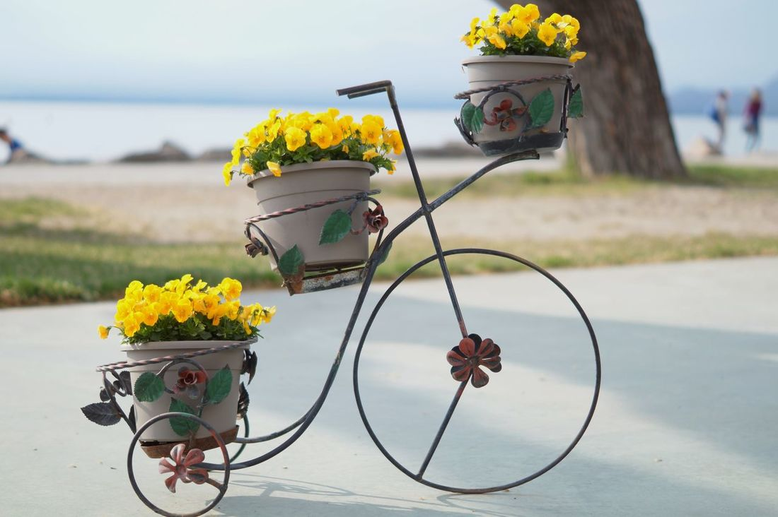 Bardolino Beauty In Nature Bicycle Close-up Day Enjoying Life Field Flower Focus On Foreground Fragility Freshness Gardasee Growth Land Vehicle Mode Of Transport Nature No People Outdoors Plant Sky Stem Taking Photos Transportation Yellow