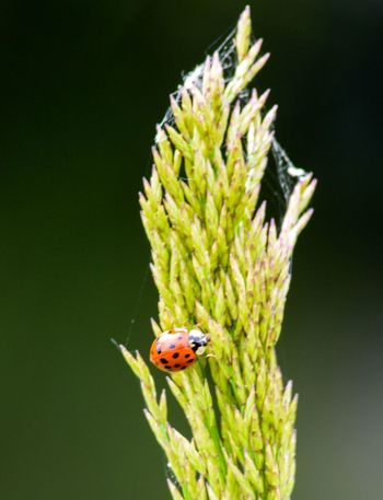 Ladybird water Animal Themes Insect Nature Ladybug Close-up