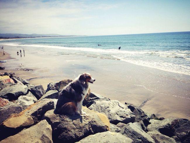 My Dog Enjoying The Sun Surfing Enjoying Life