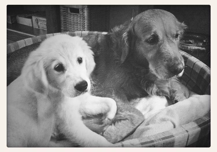 Sweet Dogs:D
