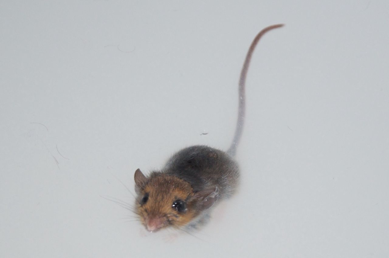 Beautiful stock photos of mouse, Animal Themes, Animals In The Wild, Copy Space, Day