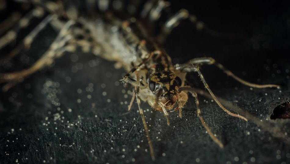 Centipede Insects  Out Walking Cool Beutiful  Macro Blur I See You Photography Morning HelloEyeEm Eyeem Insects Hola! ✋ Insectos Cienpies Cuidado Becareful Love Amor Dias De Lluvia There Motion Blur Caminando Por Ahi Hanging Out Bestphotooftheday
