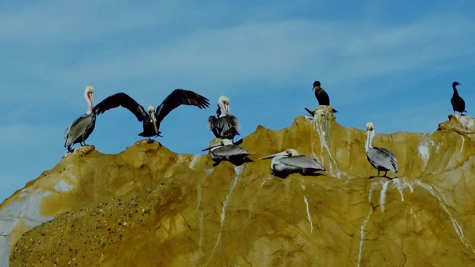 Painted Rock Rock Formation Birds Beachphotography Cove Ocean View Woods Cove