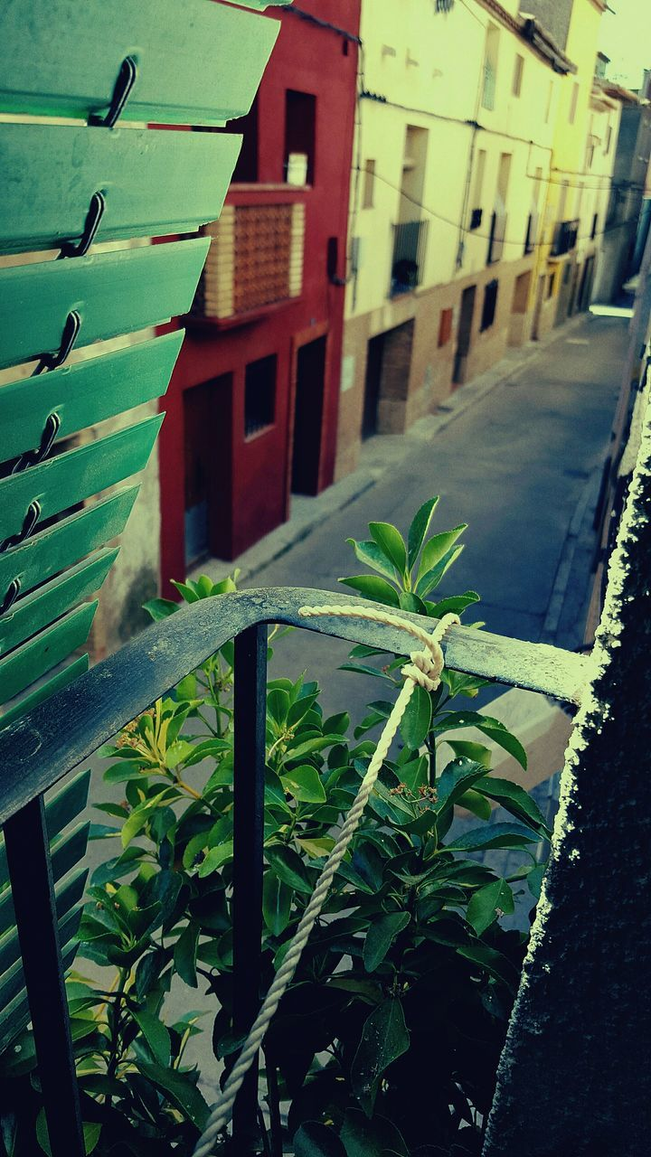 growth, plant, leaf, green color, no people, architecture, built structure, outdoors, building exterior, nature, day, close-up