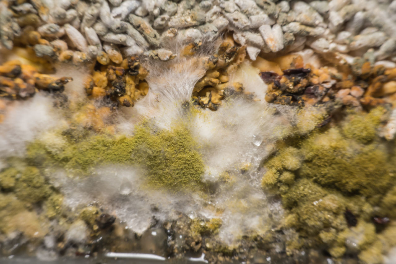 Biology Bread Bread Roll Food Food Mold Fungi Fungi Food Green Growing Growth Health Infection Macro Mold Mold Mold Food Mold Yeast Mould Safety Spore Yeast  Yest Mold