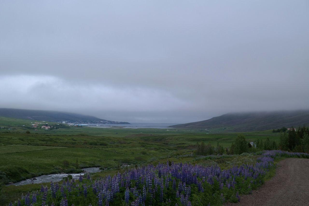 Idyllic Shot Of Fresh Purple Flowers On Landscape Against Cloudy Sky