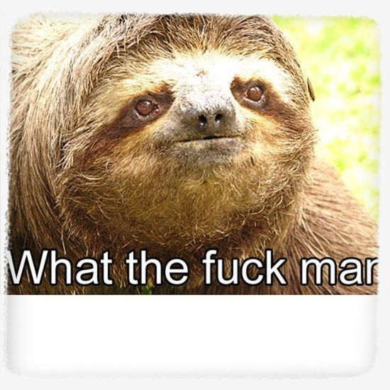 What Sloths Say, They Scare Me