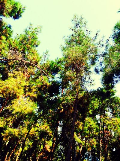 Nature White Holidaymemories Beautiful Weather Sky Trees And Sky Green