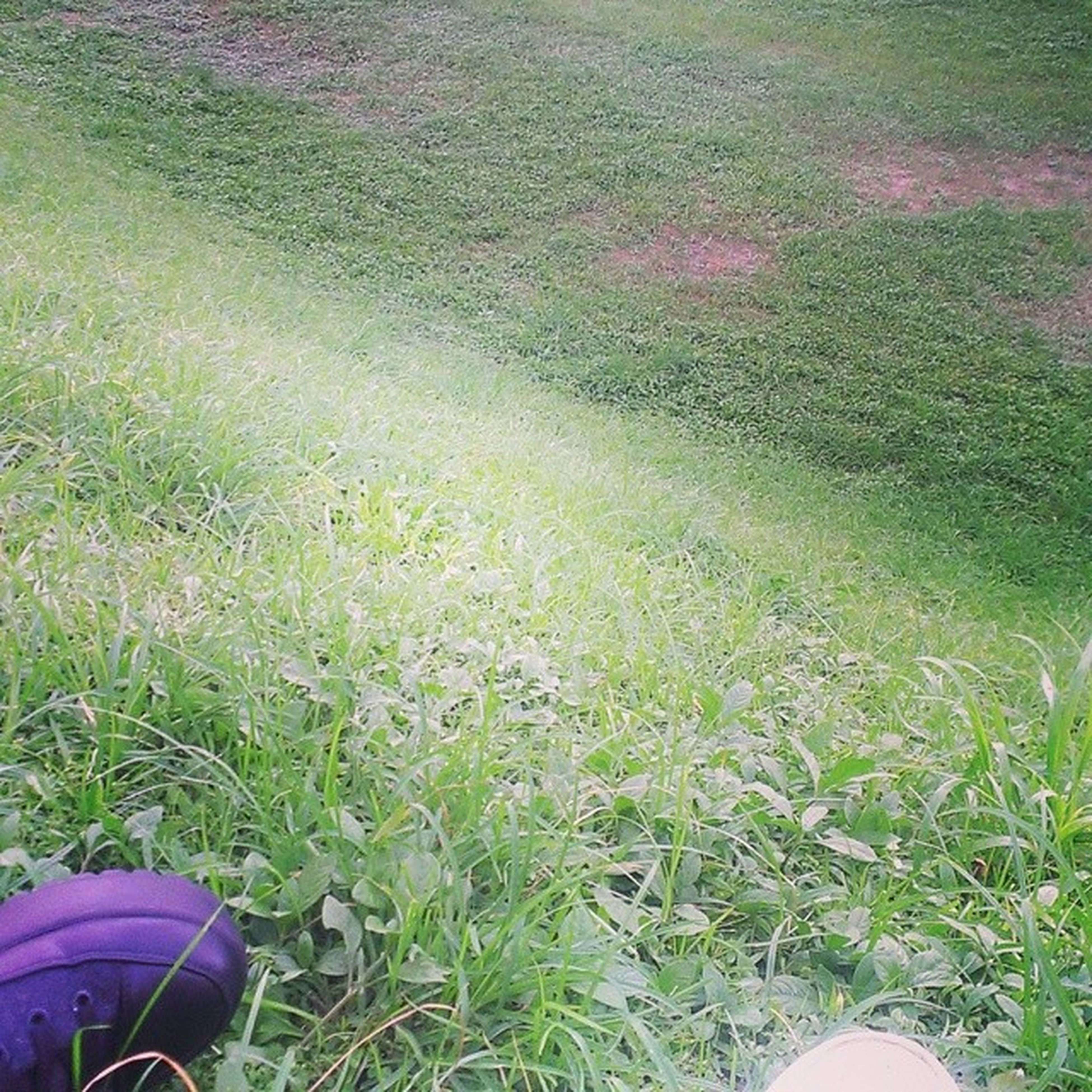 grass, high angle view, field, grassy, green color, growth, plant, nature, day, outdoors, beauty in nature, tranquility, no people, sunlight, shoe, lawn, transportation, green, low section, part of