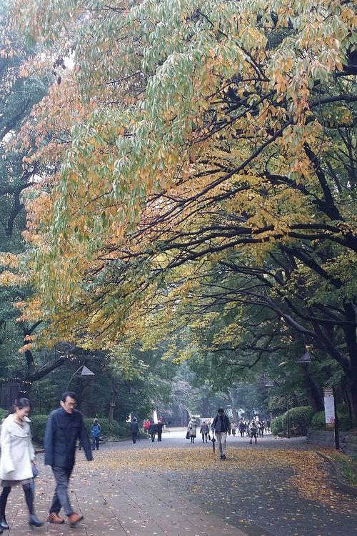 Ueno Park Autumn Colours Tokyo Autumn Tokyoautumn 2016 Tokyonature Japan Japannature Japanautumn2016
