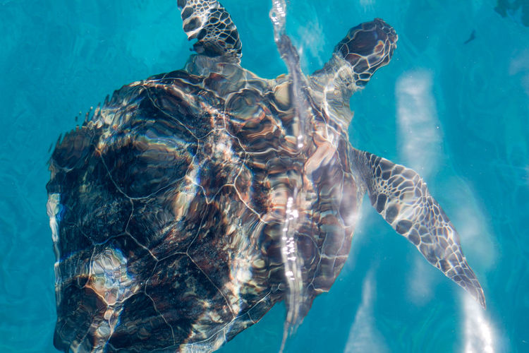 Green turtle from a yacht on the Great Barrier Reef Wildlife & Nature Water Ripples Turtle Great Barrier Reef Whitsundays Animal_collection Animal Photography Distortion Water Ripples Effect Protecting Where We Play